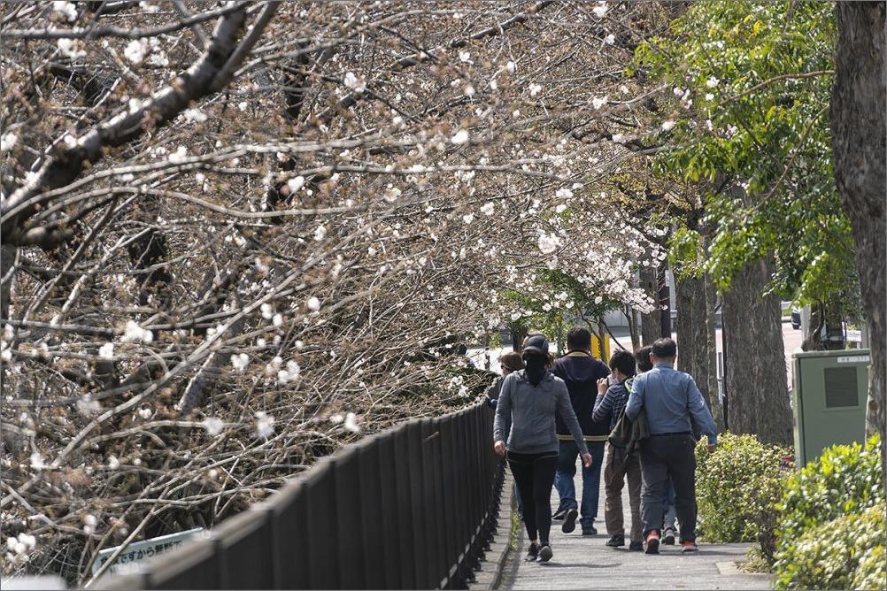 東京桜満開宣言  3月22日(日) 6859_b0069507_00054336.jpg
