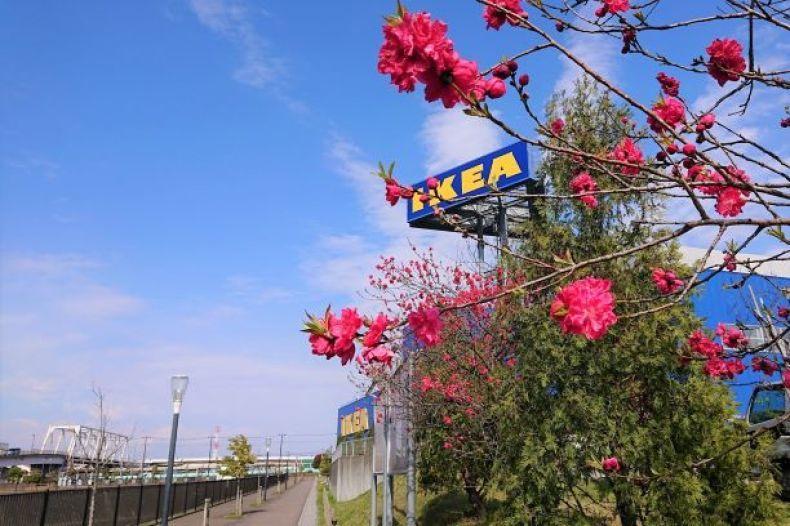 【IKEA】スクレーパー付き食器洗いブラシ_e0408608_19152151.jpg