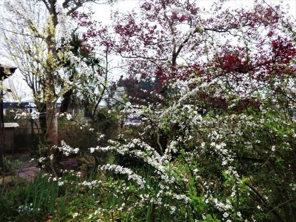 庭に春_e0352610_09192487.jpg