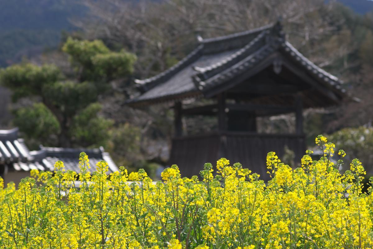飛鳥寺界隈_b0408917_16353477.jpg