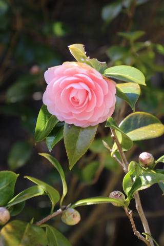 リハビリハイク-植物編_e0069822_2347771.jpg