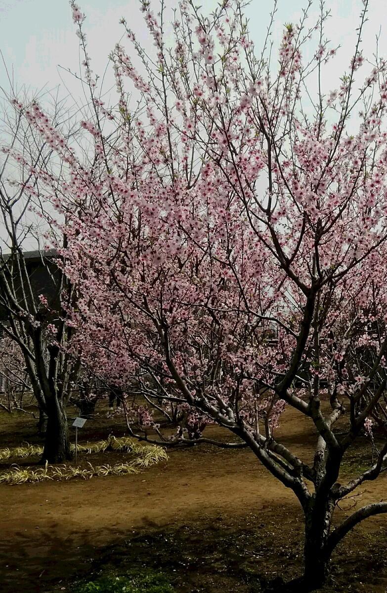 花粉症の完治_e0257524_11310653.jpg