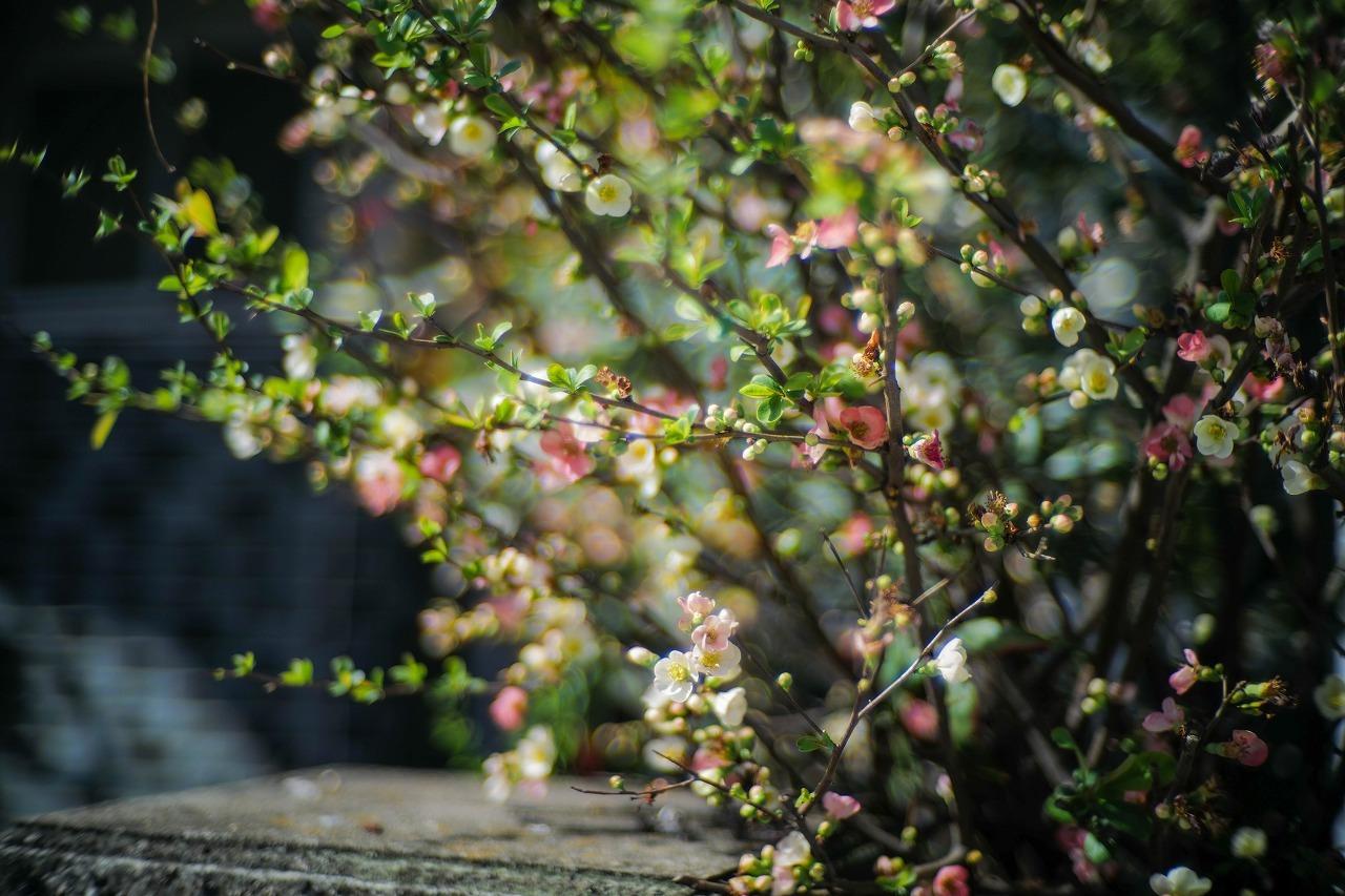 scene1662:春の花と心の春と3度目の春_e0253132_22030872.jpg