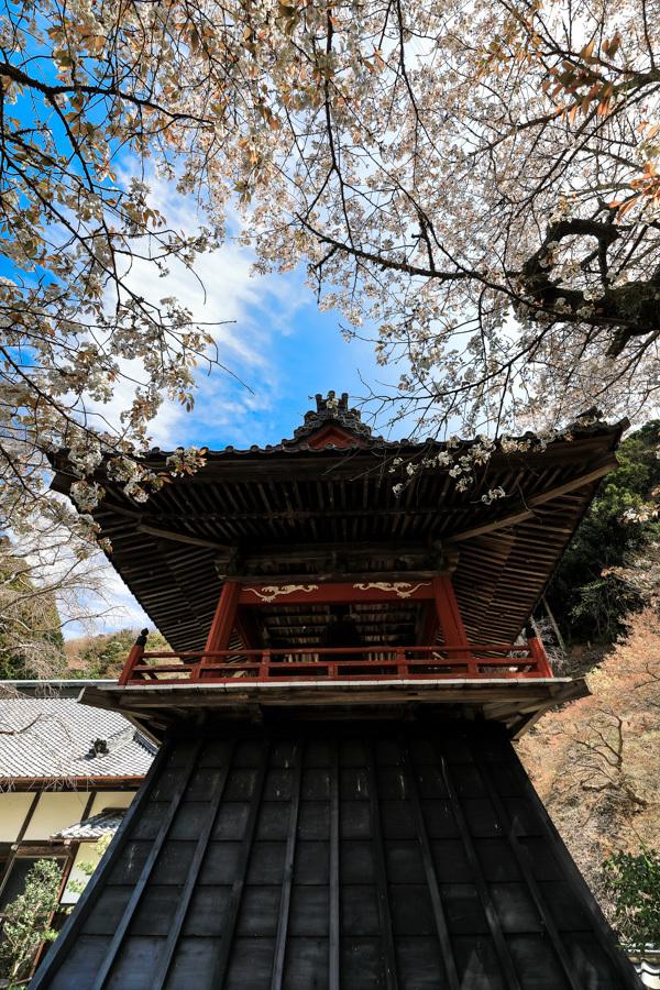 林叟院の山桜_d0377637_15325591.jpg