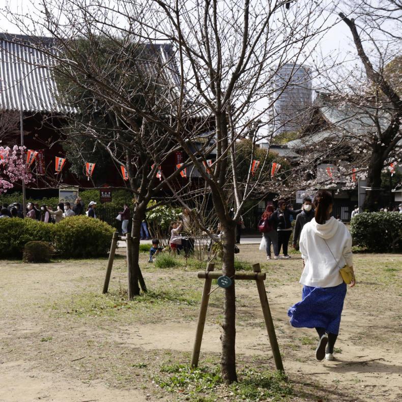 上野公園の桜_c0060143_00493452.jpg