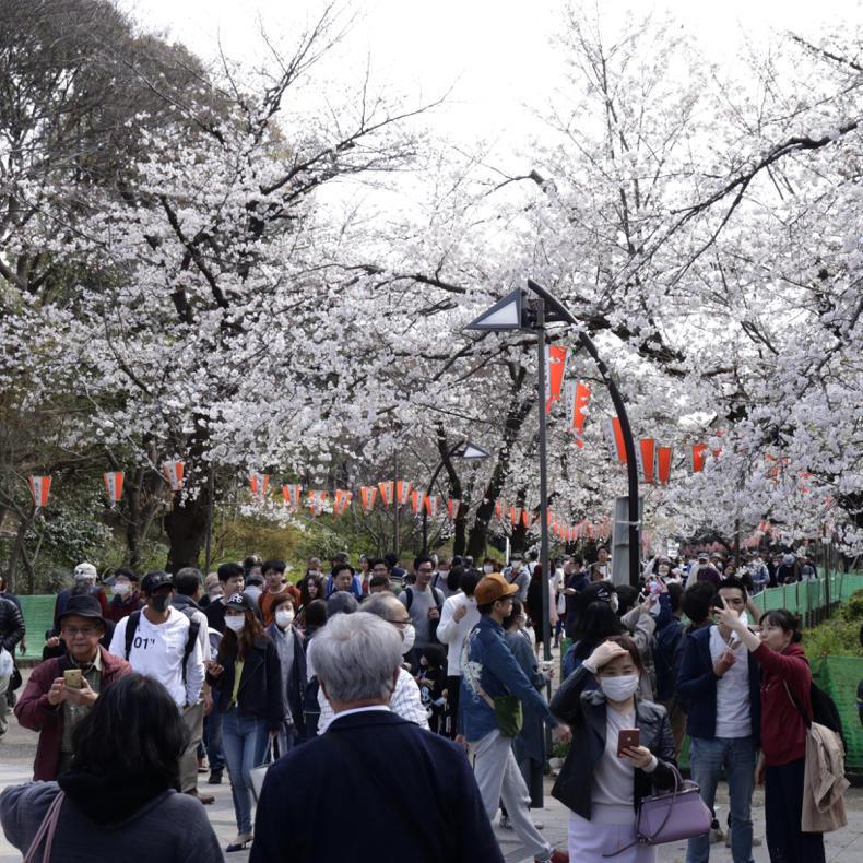 上野公園の桜_c0060143_00493586.jpg