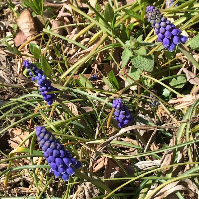 春を見つけると_e0226943_22521925.jpg