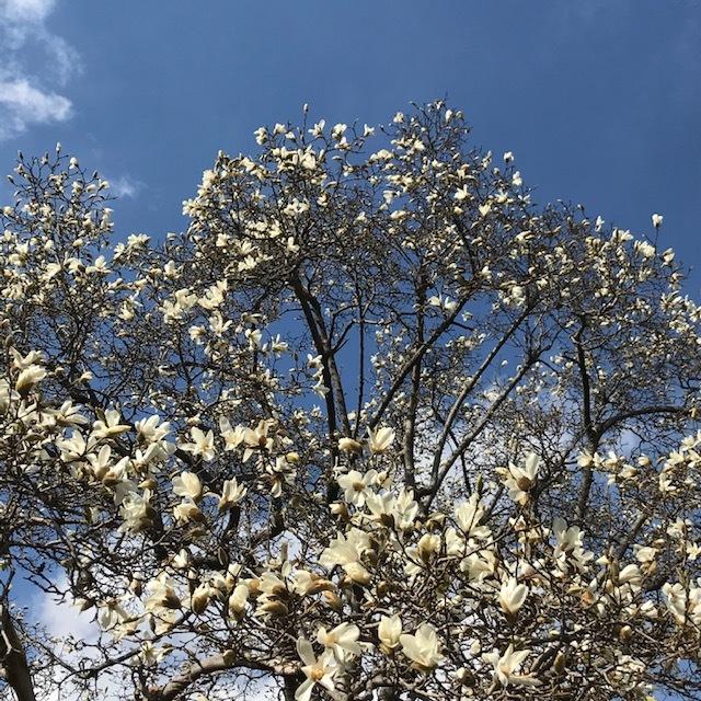 春を見つけると_e0226943_22523209.jpg