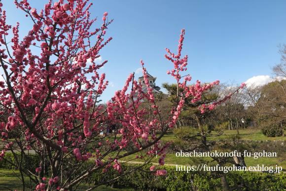 梅の花が、満開です(^_^)v&お花見に、持って行きたいお弁当&休日ののんびりブランチは、冷たいお蕎麦_c0326245_12053758.jpg