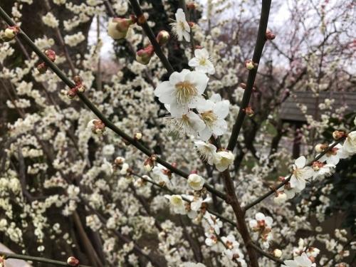 京都・奈良 冬の旅'20 その6_e0326953_18351374.jpg