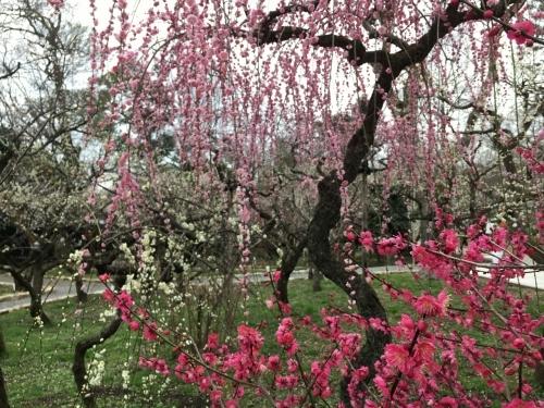 京都・奈良 冬の旅'20 その6_e0326953_18372221.jpg