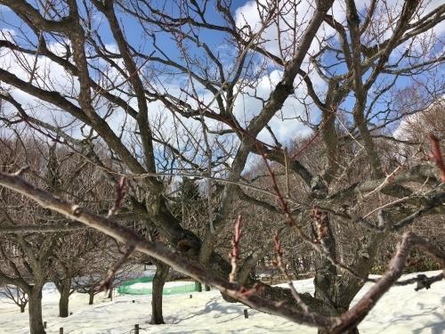京都・奈良 冬の旅'20 その6_e0326953_19130003.jpg
