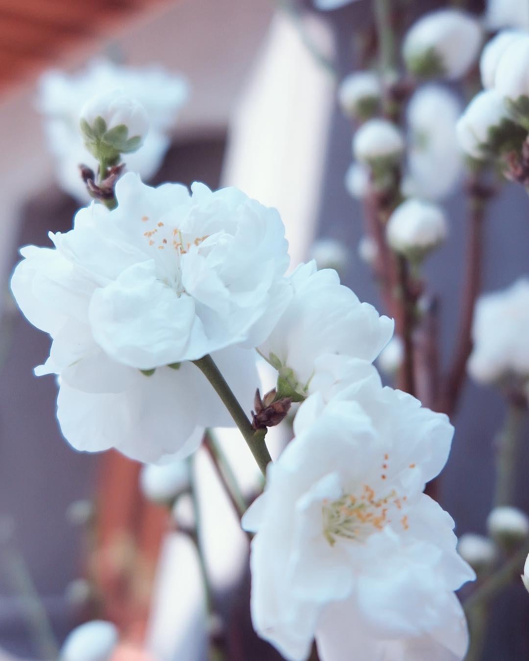 桃のこと、書の究極は人物に歸するの事_f0389753_13434095.jpeg