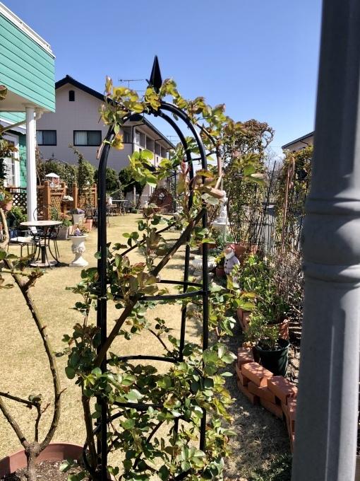 風で飛び散ったバラの葉っぱ(T . T)と、色が違うプリムラオブゴニカ(^^;;_a0396654_21200116.jpeg