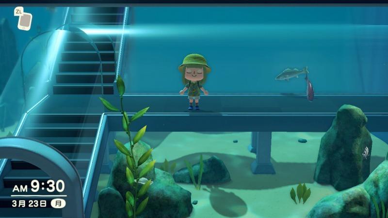 ゲーム「あつまれどうぶつの森 博物館オープン&シーラカンス釣り上げたぞ!!」_b0362459_22240861.jpg