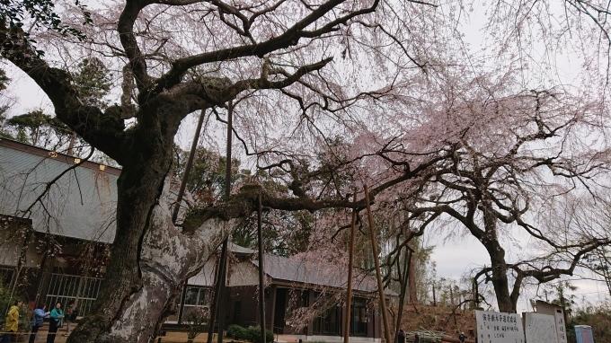次はスタジオキルトのキットを&しだれ桜♪_f0374160_23132267.jpg