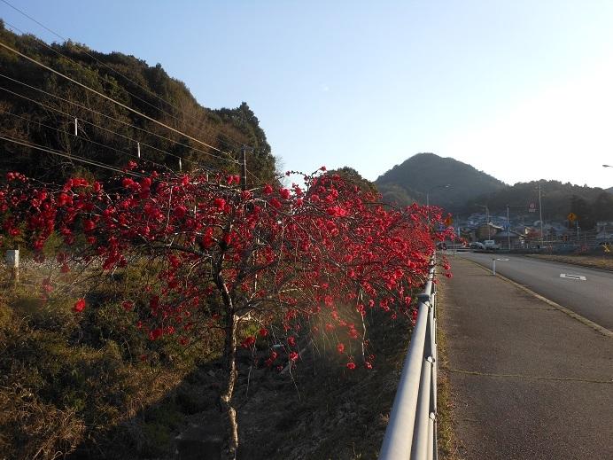 沿道を彩る緋色の花_e0175370_22194197.jpg