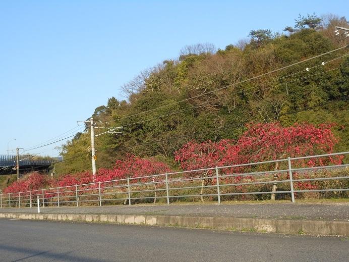 沿道を彩る緋色の花_e0175370_22201662.jpg