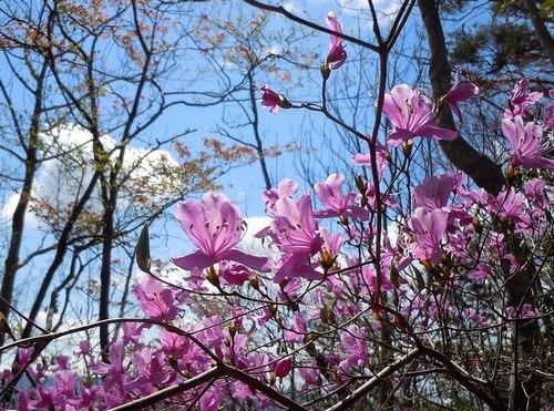 もうひとつのご近所花めぐり_b0102572_10455071.jpg