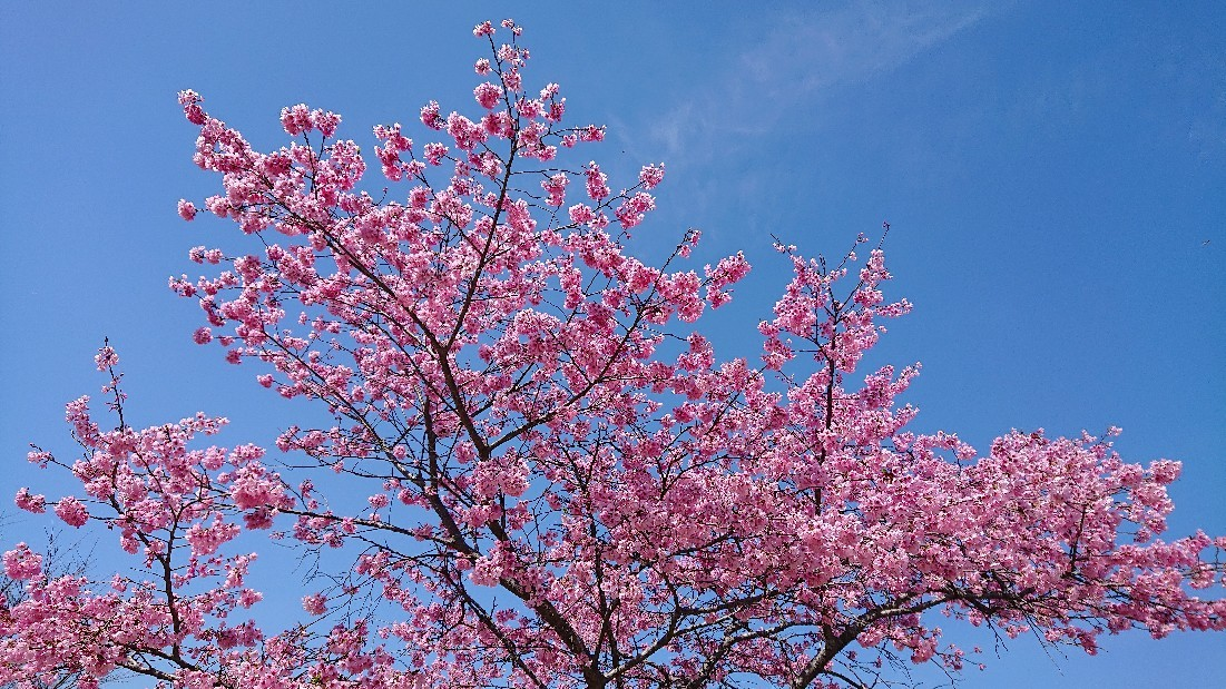 春色のスタート & 牡羊座の新月***_e0290872_22380963.jpg