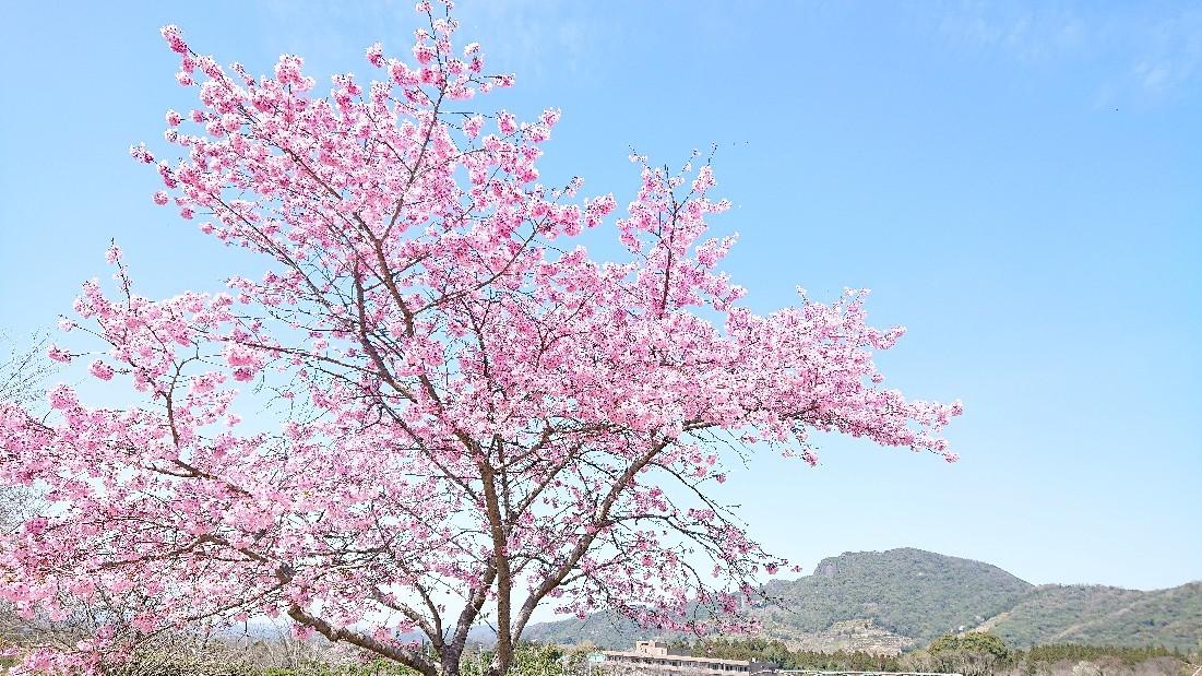 春色のスタート & 牡羊座の新月***_e0290872_22381019.jpg