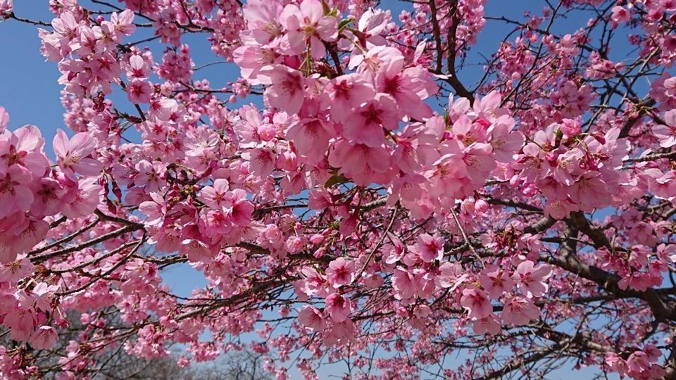 春色のスタート & 牡羊座の新月***_e0290872_22390944.jpg