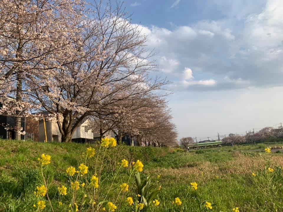 お花見&誕生会_e0040673_10100961.jpg