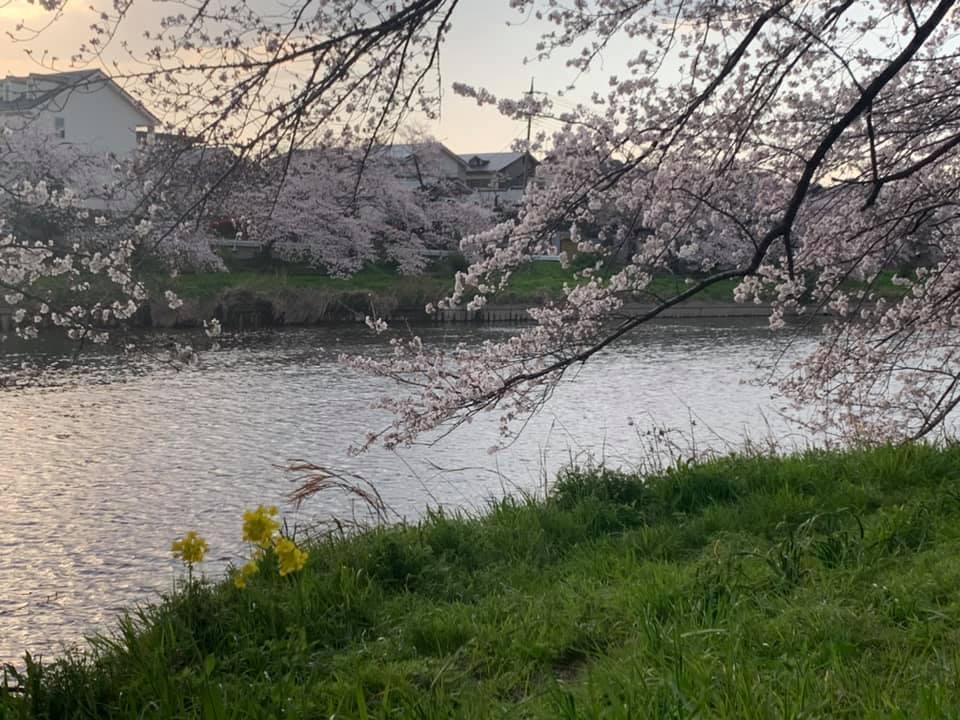 お花見&誕生会_e0040673_10102335.jpg