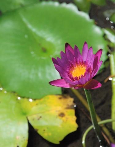 新しい世界へ向かうために。バリ島、静寂のニュピに思う_b0053082_22024713.jpg