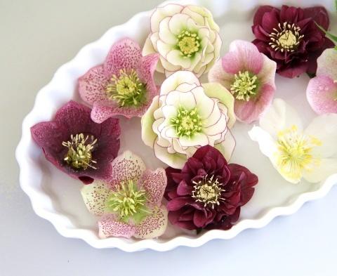 ◆ティラミスが咲きました!_e0154682_23292886.jpg