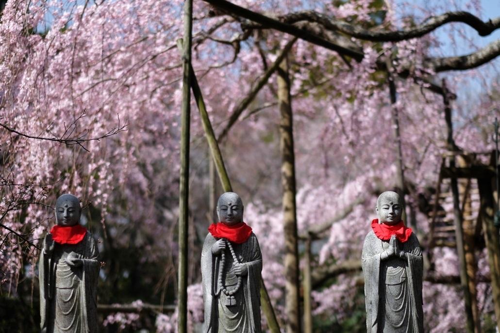 水戸市六地蔵寺の枝垂れ桜 2020・03・20~21_e0143883_05023647.jpg