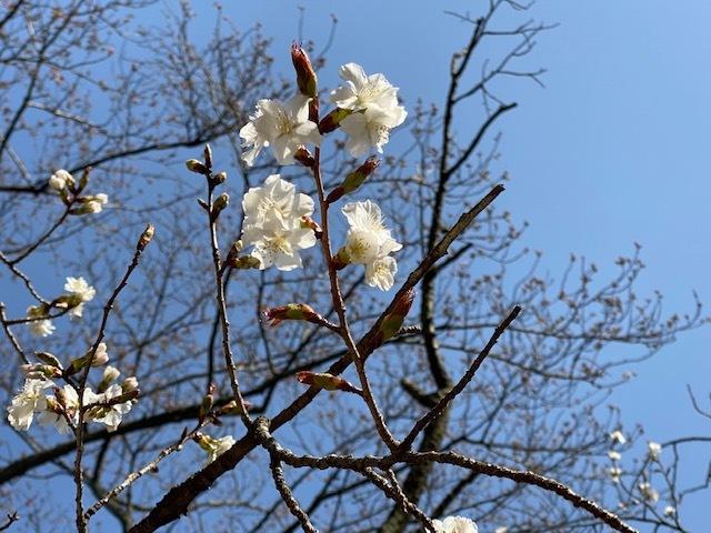 もうすぐ!4月♪_f0232994_11481413.jpg
