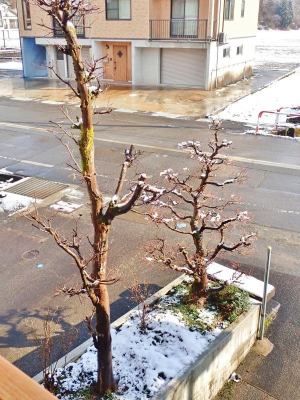 彼岸のノリ雪か! 久し振りに白くなりました_c0336902_19534512.jpg