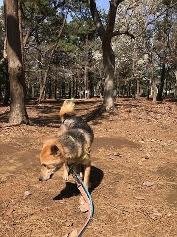 三連休は散歩三昧 ~ワカ編~_f0242002_20013978.jpg