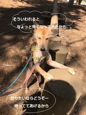 三連休は散歩三昧 ~ワカ編~_f0242002_20015252.jpg