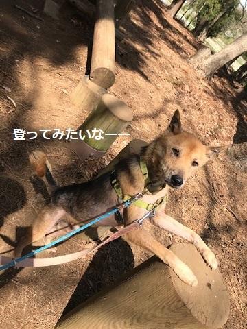 三連休は散歩三昧 ~ワカ編~_f0242002_20053602.jpg