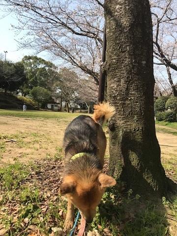 三連休は散歩三昧 ~ワカ編~_f0242002_20094209.jpg