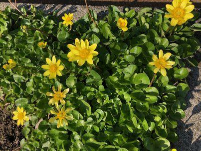 春・・・_e0273004_13563305.jpg