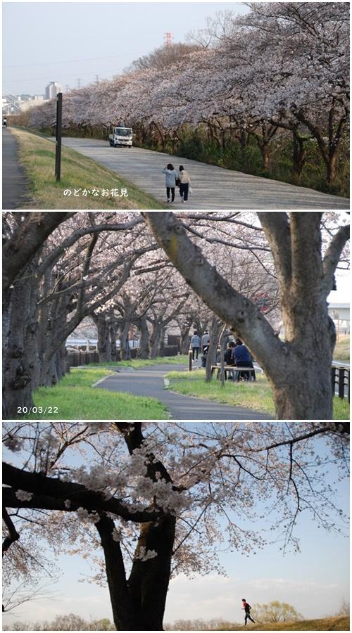 お不動さんの桜・庭の花・蘭_c0051105_14223166.jpg