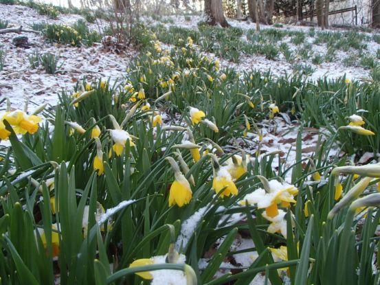 春へ一歩後退_f0064906_10391279.jpg