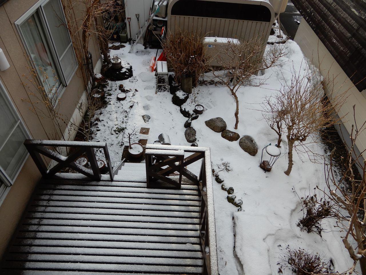 雪どけは足踏み、ヒヨドリも動きが鈍い_c0025115_23484778.jpg