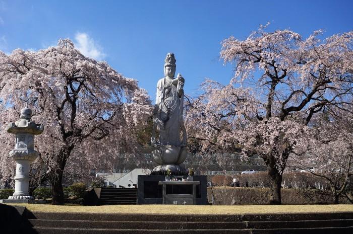 ■【さがみ野霊園の枝垂れ桜が満開です♪】_b0033423_23454233.jpg