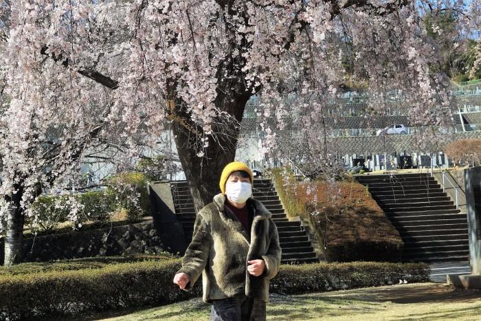 ■【さがみ野霊園の枝垂れ桜が満開です♪】_b0033423_23552637.jpg