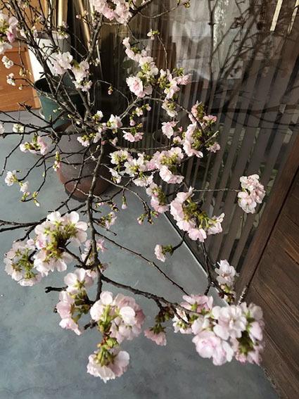 桜_b0134123_23201761.jpg