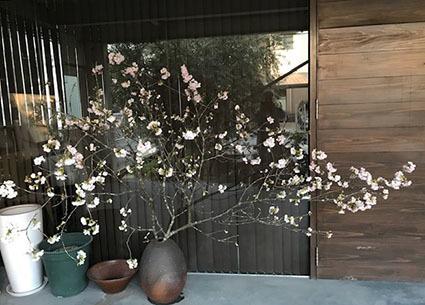 桜_b0134123_23211283.jpg