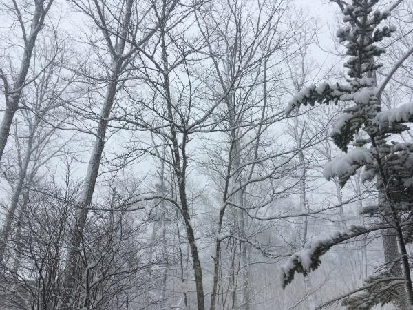 雪が降っています。ノーマルタイヤ危険!(2020年3月24日)_b0174425_08291284.jpeg