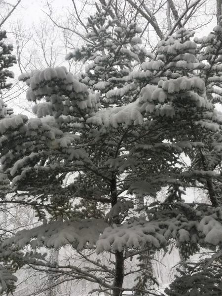 雪が降っています。ノーマルタイヤ危険!(2020年3月24日)_b0174425_08325746.jpeg