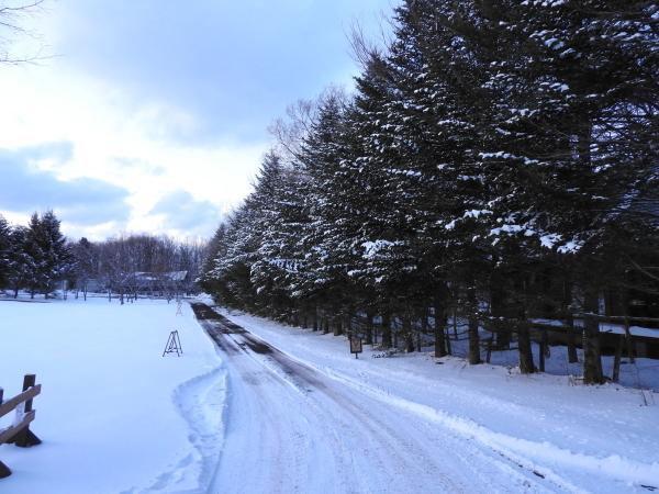 雪が降っています。ノーマルタイヤ危険!(2020年3月24日)_b0174425_21325487.jpg