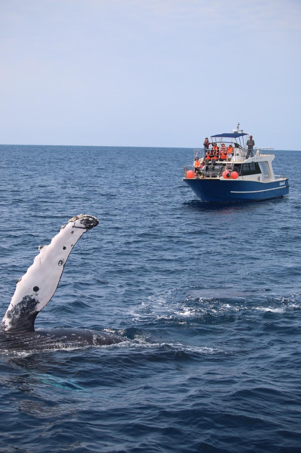 クジラシーズン終了_d0224927_10190614.jpeg