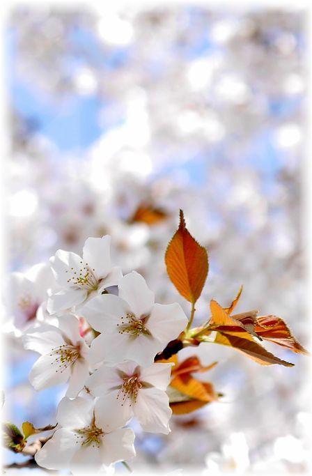 花冷え_f0143227_20550422.jpg